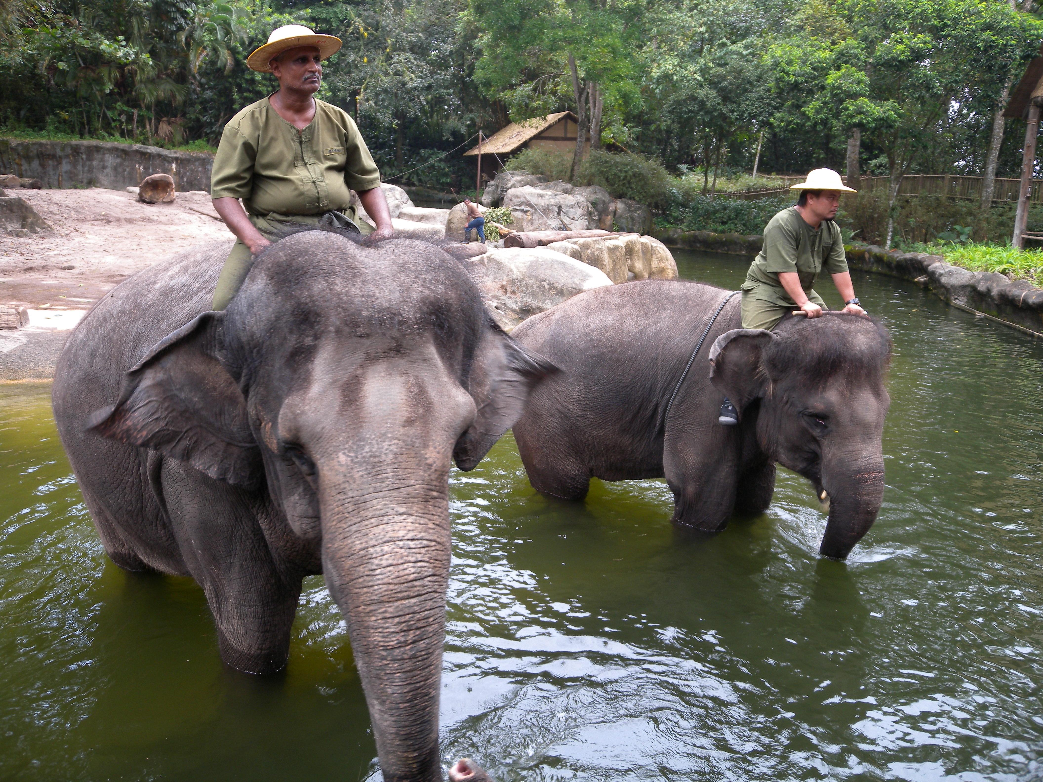 Singapore Zoo Singaporekids365 River Safari Anak But