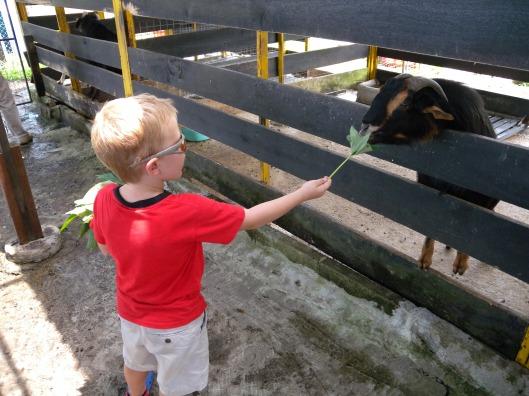 Farmart Goats