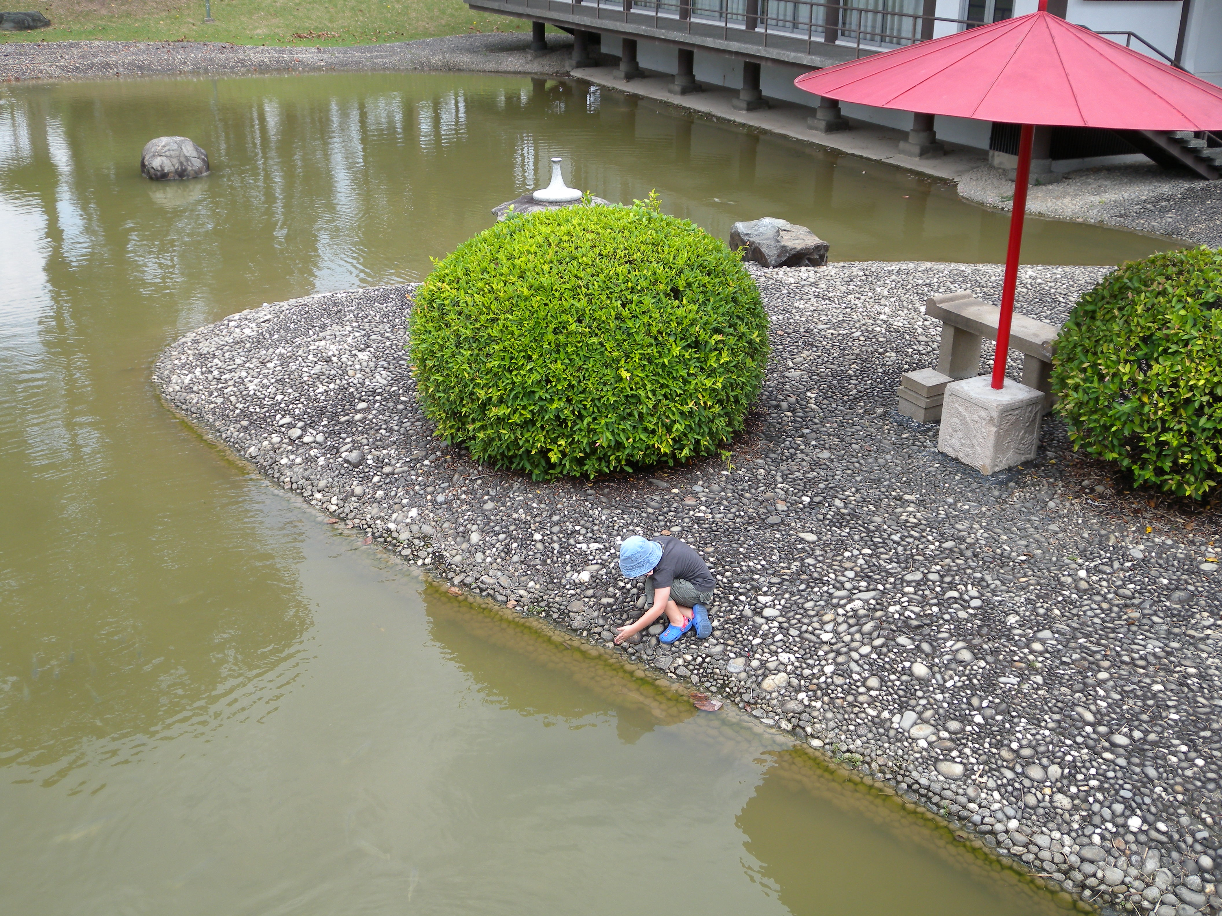 This group 39 s content is available only to members marina for Japanese garden fish