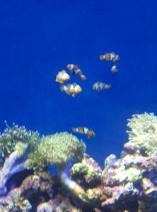 Marine Life Park Nemo