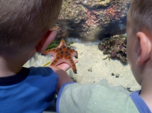 Marine life park touch tank
