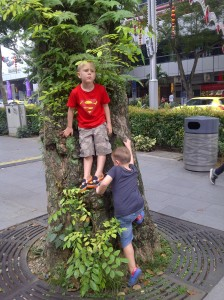 Orchard Road tree